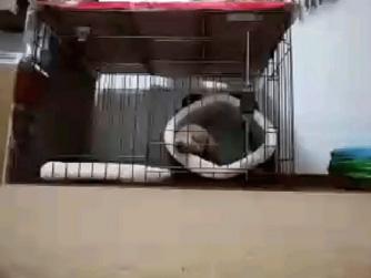 ペット見守り遠隔監視カメラアプリ「alfred」